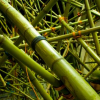 Big Bambu, Amazing Artistic Installation Made by Beacon Duo