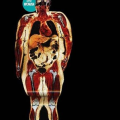 The abuse omega 6 and the deficit in omega 3 support obesity from generation to generation