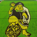 Amazing rice art in Japan