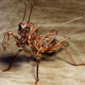 Steampunk Insect Made From Bunch of Wires